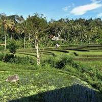 Road trip Bali 1