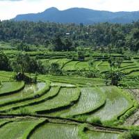 Road trip Bali 7